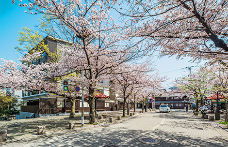 Cherry Blossom・Fall Colors