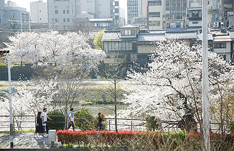 Kamo River・Kawadoko Dining