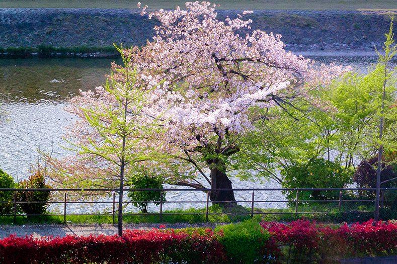 (202,302,402号室)美しい鴨川に癒されるリバービュー
